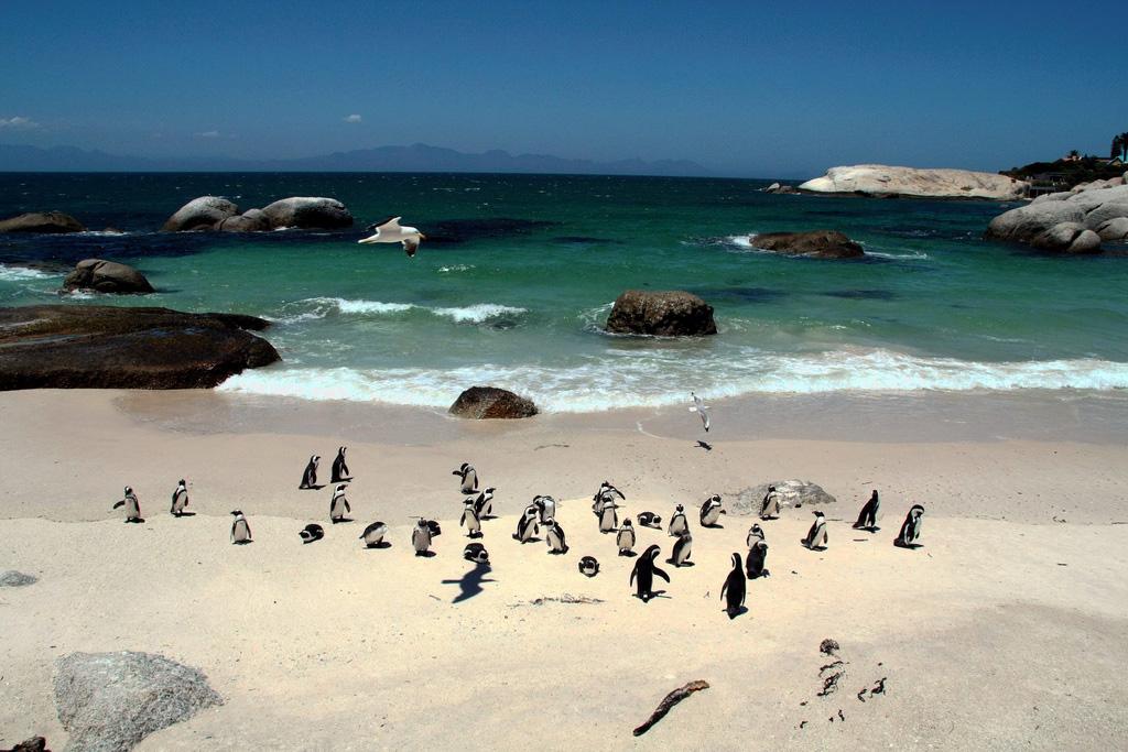решение пляжи юар фото и описание нашем сайте