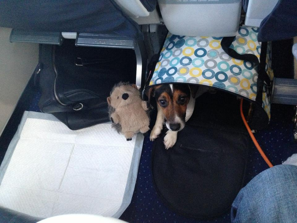 Сколько стоит билет на собаку в самолет по россии купить билет поезд полоцк минск