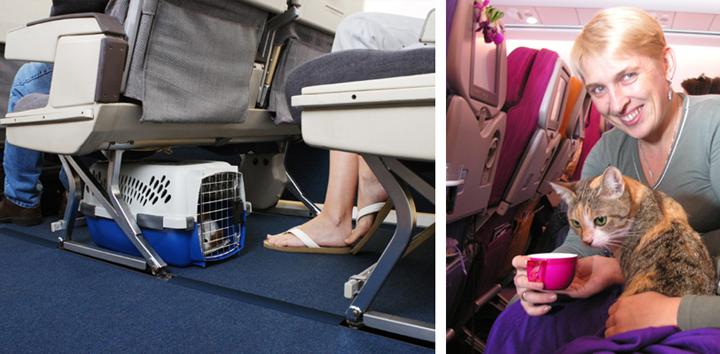 Как перевозить кота аэрофлотом
