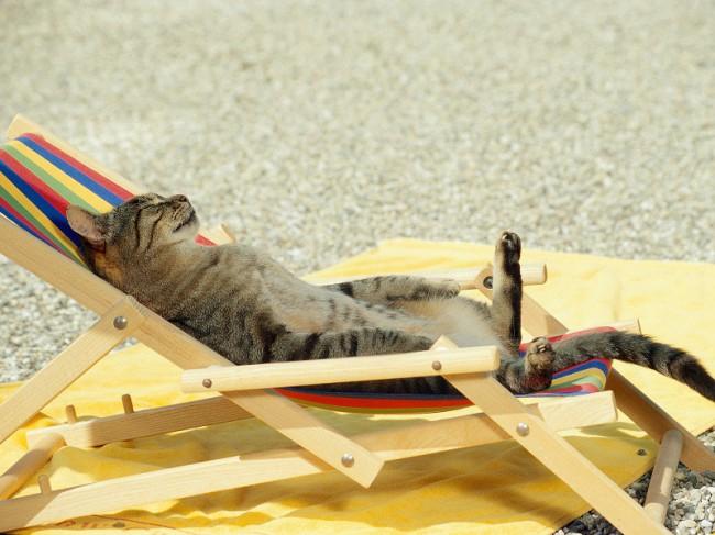 Многие авиакомпании разрешают провозить в ручной клади кошек, помещенных в специальный контейнер