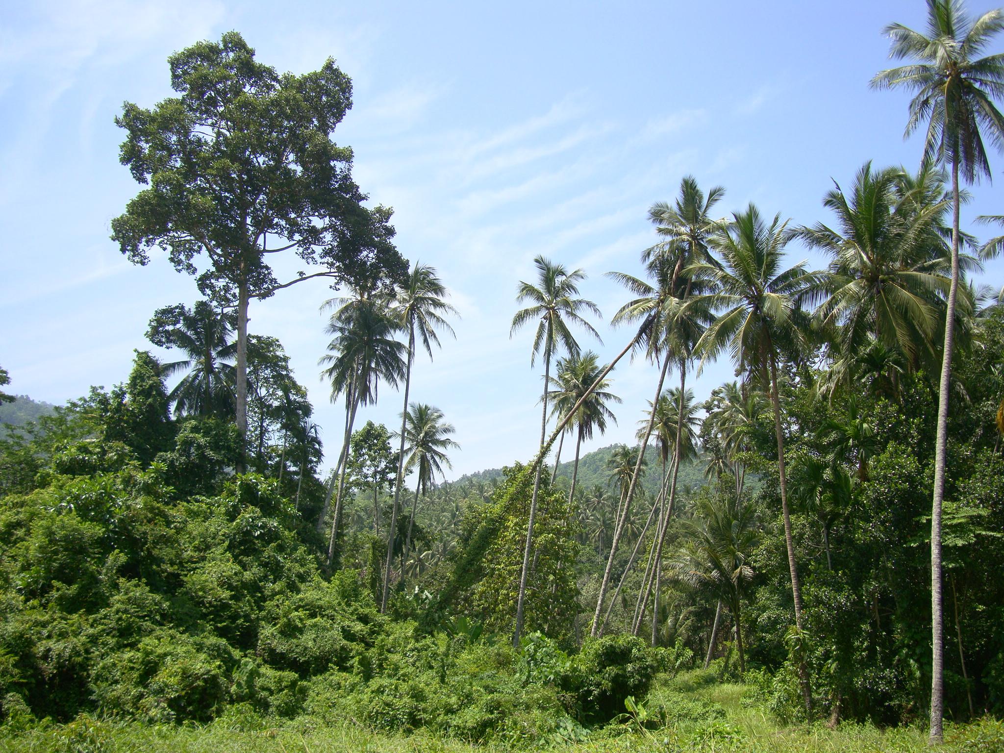 Картинки природы острова