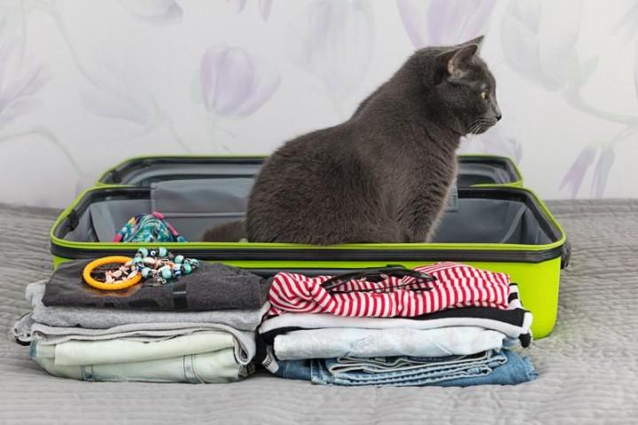 Чтобы не жалеть о потраченных средствах, нужно правильно укомплектовывать багаж